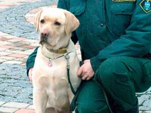 Обученые пограничные собаки обнаружили в аэропорту наличные на сумму 110 000 EUR
